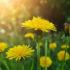 Правила выживания: растения, которые спасут от голода в лесу